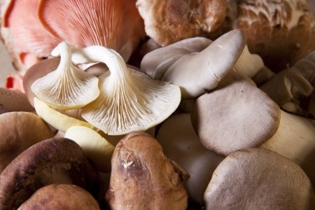 Why should you be eating mushrooms every day